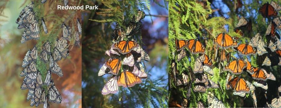 Redwood Park (2)