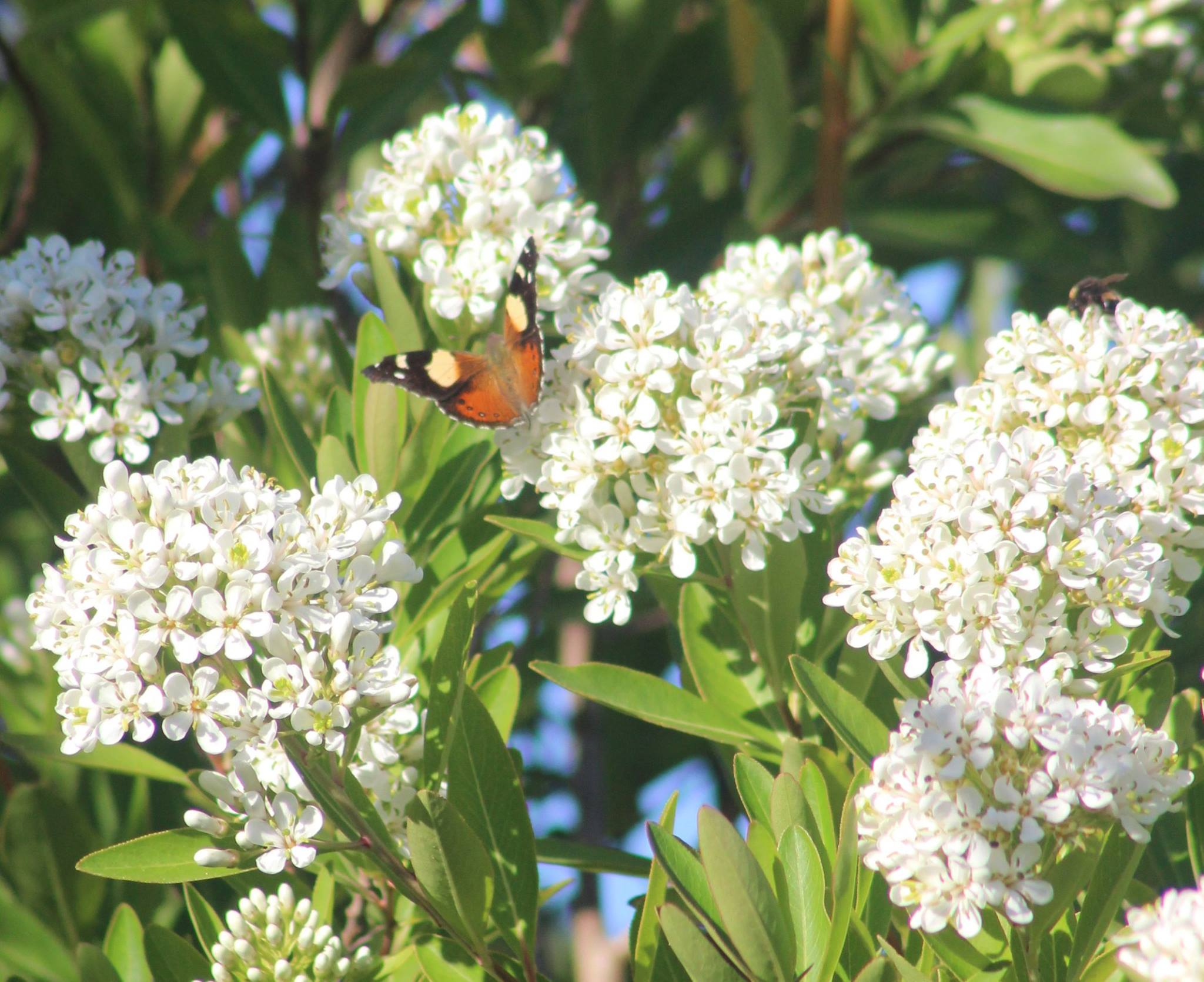 Monarchs are the doorway to nature – The Butterfly Musketeers